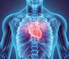 Cardio Support 60 Capsules